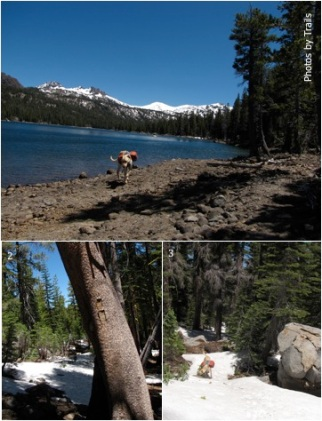 Caples Lake and snow-covered trail to Emigrant Lake