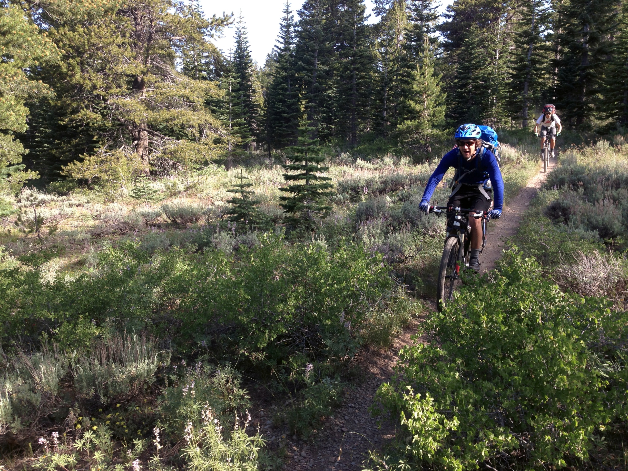 The Tahoe Rim Trail: A Complete Guide for Hikers, Mountain ...
