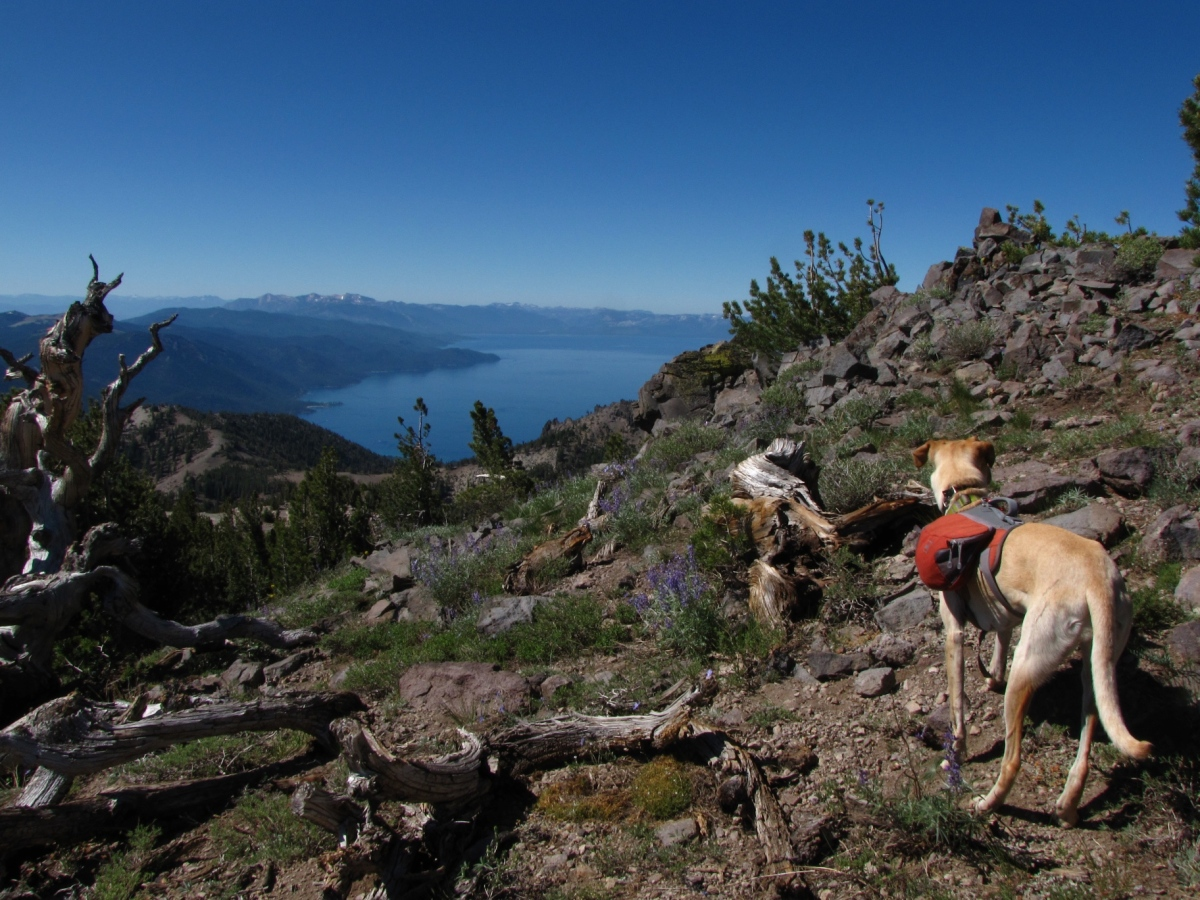 Tahoe Rim Trail: The Official Guide for Hikers, Mountain ...