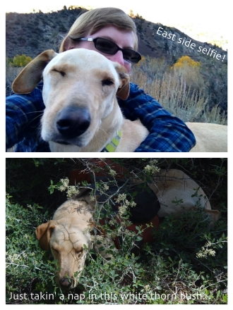 Aspen selfie and hiding in a bush