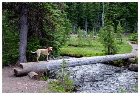 Crossing Fall Creek