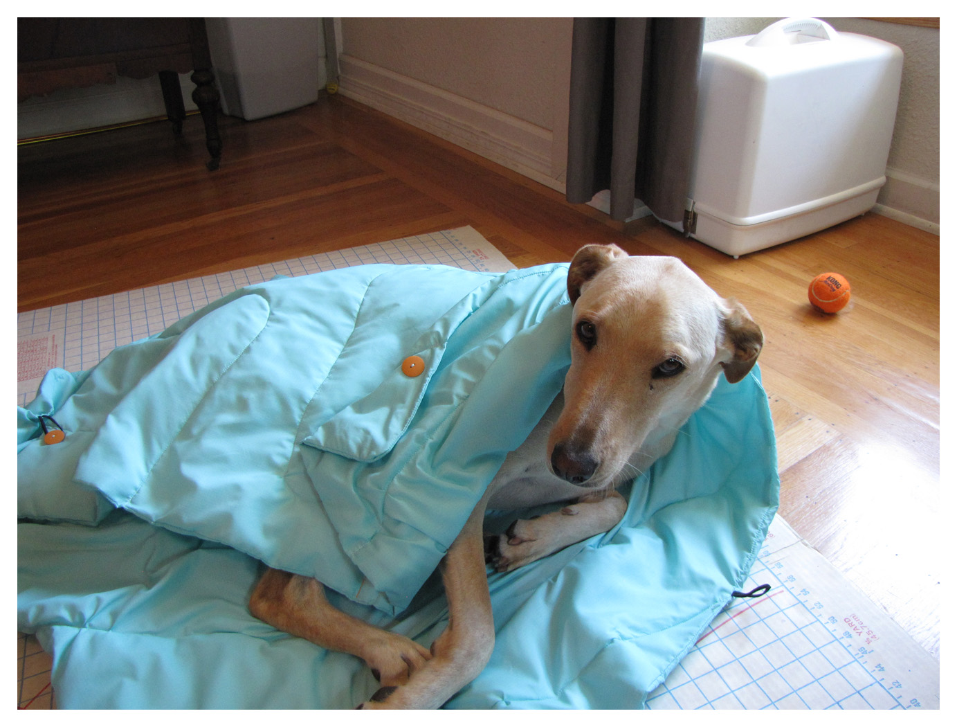 diy adventure pup sleeping bag trails guide