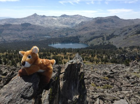 Harper Fawn on Mount Tallac