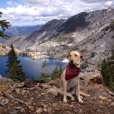 Aspen improves landscapes