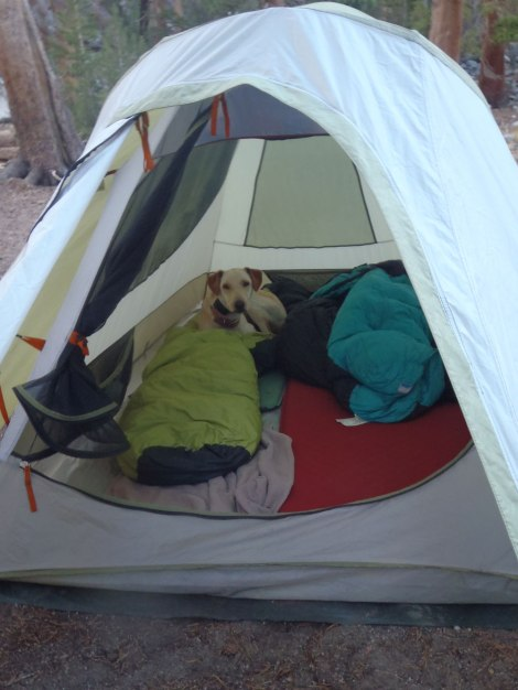 Aspen in tent