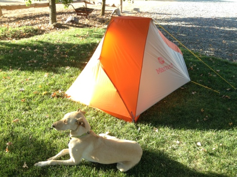 Tent and Aspen