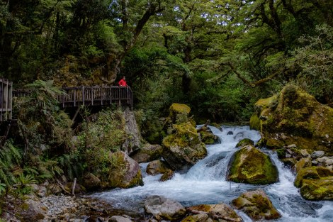 Along the rapids of the Hollyford River