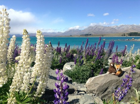 Lupin, Kiwi, and Harper Fawn at Lake Tekapo