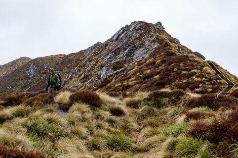 Get your trekking poles ready, the descent to Iris Burn Hut is taxing on the knees. Photo by Compass